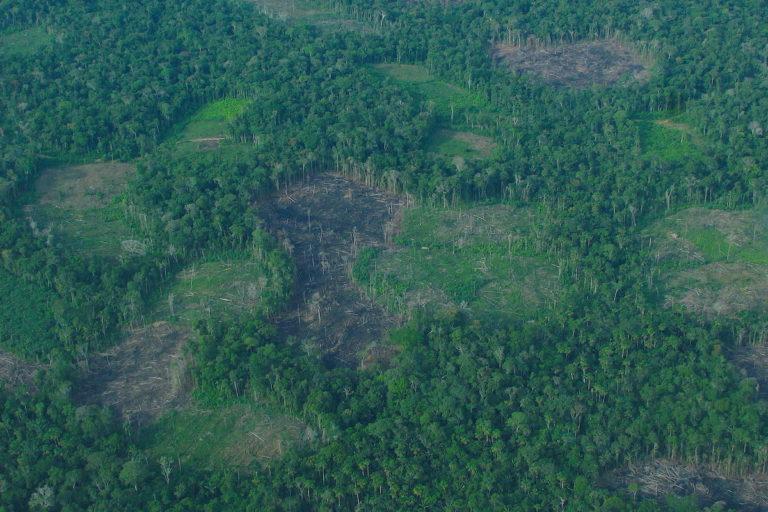 La deforestación y degradación de los bosques amazónicos son condiciones habilitantes para la aparición y expansión de enfermedades epidémicas como el dengue y la malaria. Foto: Enrique Ortiz - Andes Amazon Fund.