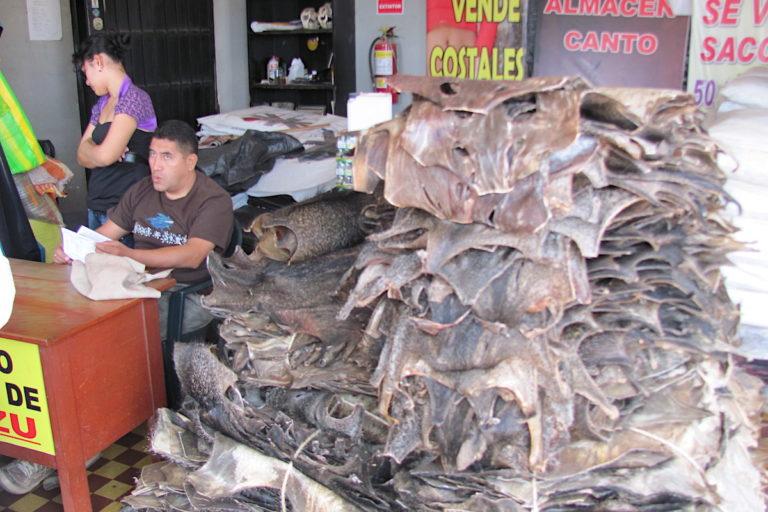Muchas especies silvestres son reservorios naturales de organismos patógenos potencialmente epidémicos. La cacería y el comercio de especies silvestres es un mecanismo seguro para la transmisión de ellos a los humanos. Foto: Enrique Ortiz - Andes Amazon Fund.