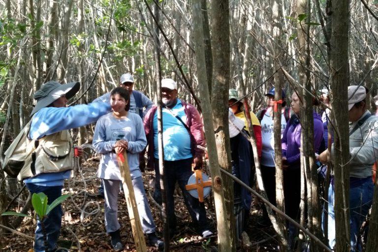 Proyectos de restauración de manglares en México. Participación de las comunidades. Foto: cortesía Jorge Herrera.