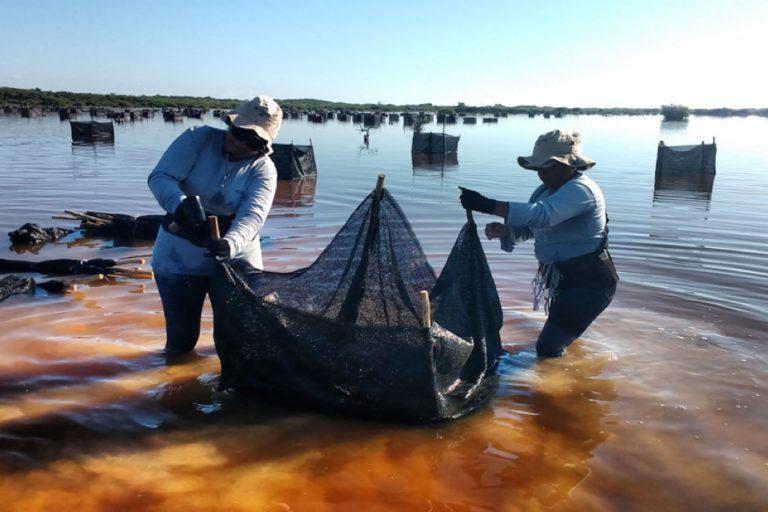 Trabajo de rehabilitación hidrológica en México. Foto: cortesía Jorge Herrera.