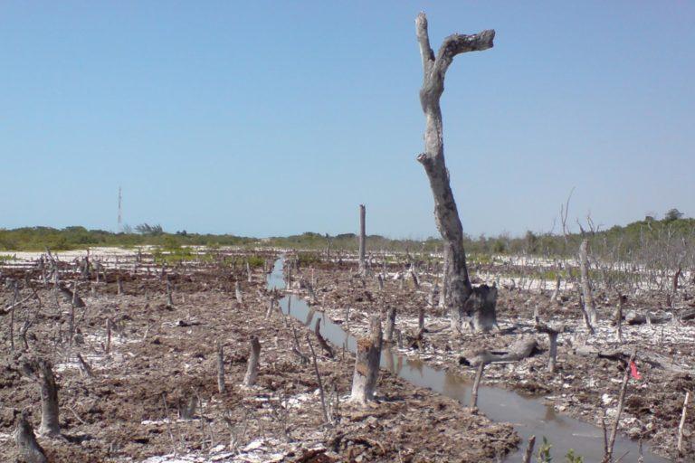 Zona deforestada de manglar en México. Foto: cortesía Jorge Herrera.