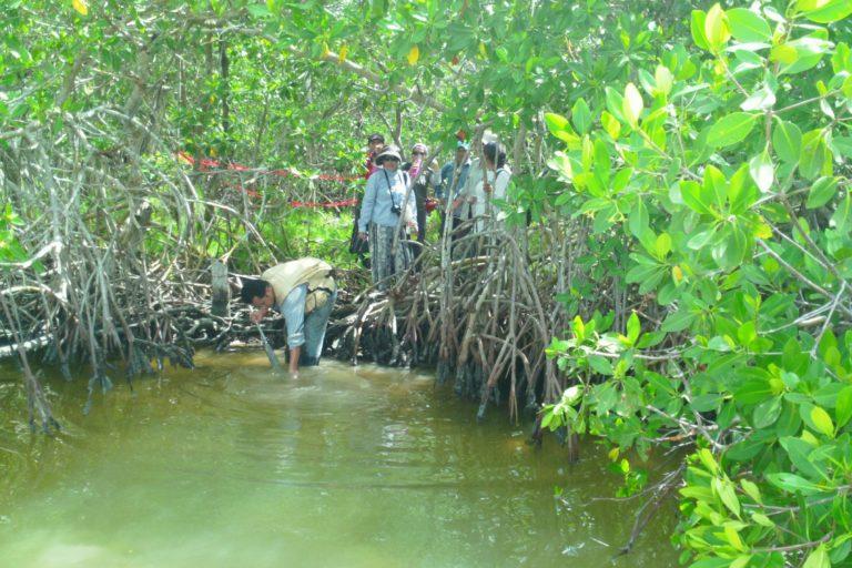Proyecto de restauración de manglares en México: Foto: cortesía Jorge Herrera.