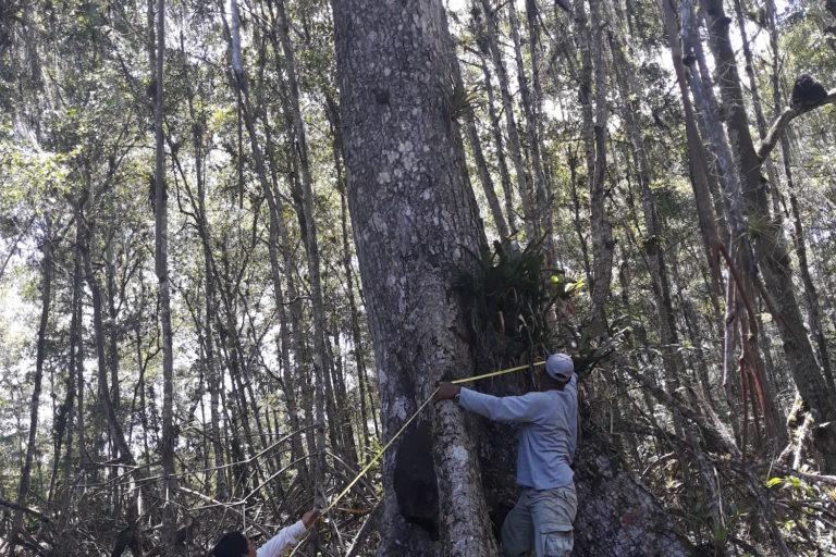 Medición de manglares en Esmeraldas con participación de guardaparques. Foto: Natalia Molina.