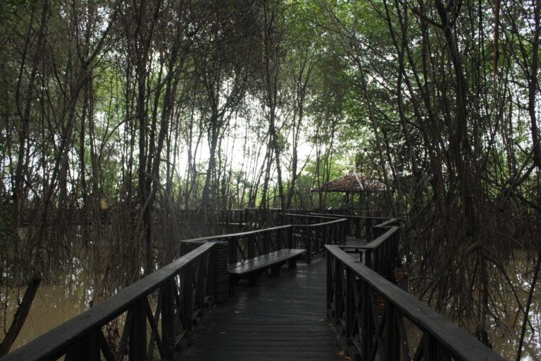Manglares restaurados del Parque Histórico Guayaquil. Foto: Natalia Molina.