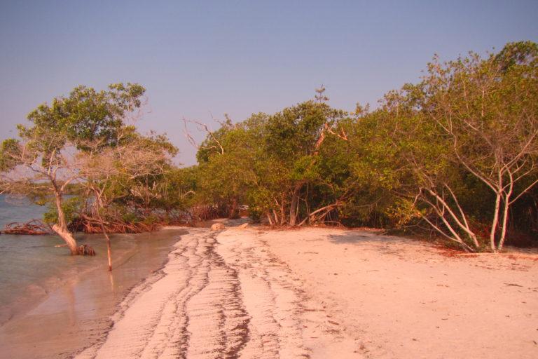 Bosque de manglar en Colombia. Foto: José Ernesto Mancera.