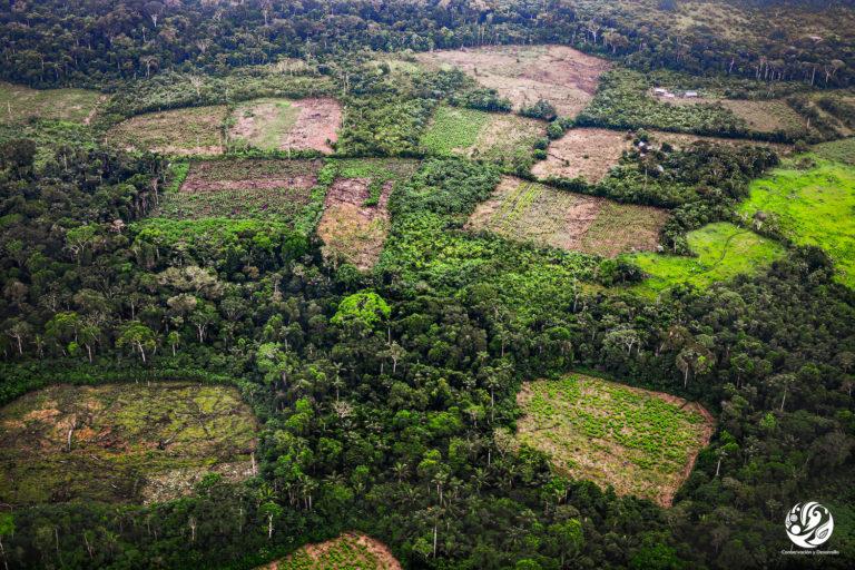 Lotes deforestados en el parque Sierra de La Macarena, contiguo al parque Tinigua. Foto: FCDS.