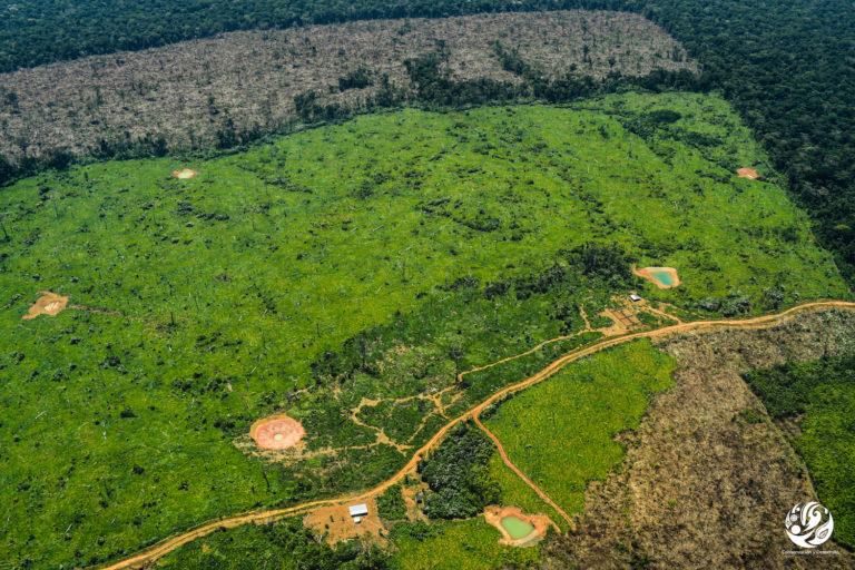 Los sobrevuelos de FCDS muestran un incremento en la apertura de vías en la Amazonía colombiana. Foto: FCDS.