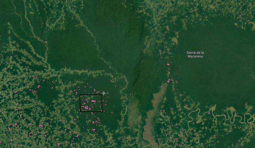 En la semana del 29 de marzo de 2021, Global Forest Watch emitió 53.340 alertas de deforestación en el parque Tinigua. Imagen: Global Forest Watch.