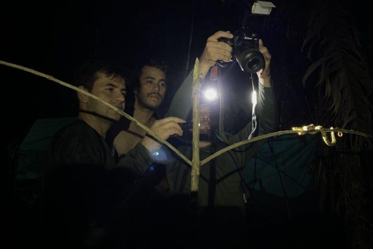 Hugo, Iván y Carlos Mario fotografiando una serpiente Bothrops punctatus. Foto: Diego Calderón-Franco @diegoCOLbirding @TheBirdersShow.