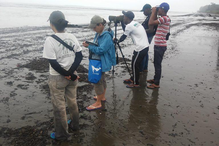 Conteo de aves playeras migratorias en la costa Pacífica de Colombia. Foto: Asociación Calidris.