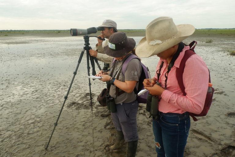 Conteo de aves acuáticas migratorias en los llanos del Casanare, Colombia: Foto: Asociación Calidris.