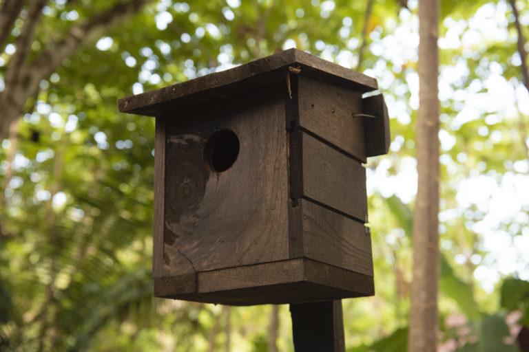 Esta casita pretende ser utilizada por las aves como refugio como parte del experimento que está probando metodologías de refaunación. Foto: Nina Cordero.
