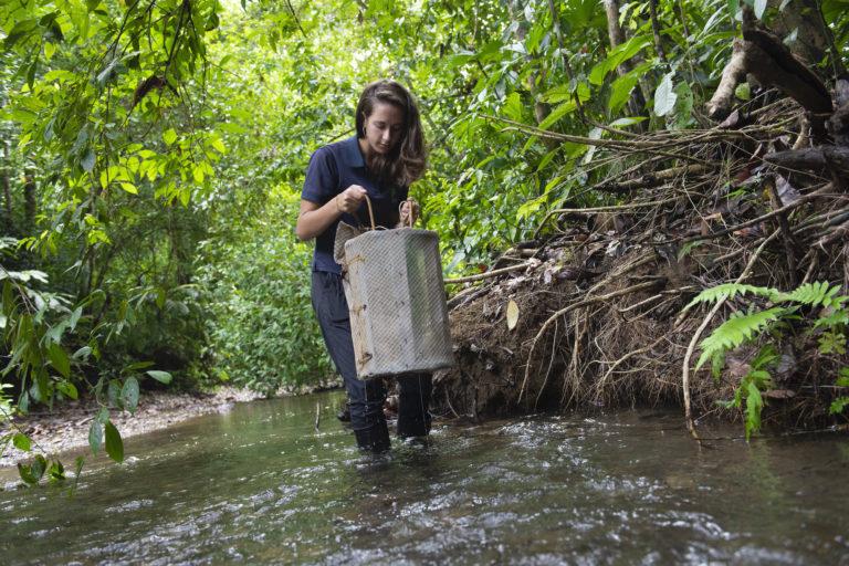 Hilary Brumberg revisa una trampa de camarones dispuesta en el río Piro, cerca de la estación biológica de Conservación Osa. El monitoreo periódico de los ríos permite evaluar la salud del ecosistema. Foto: Nina Cordero.