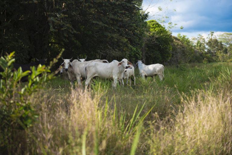 Para evitar que el ganado ingrese al área reforestada, se colocó una cerca viva. Foto: Nina Cordero.