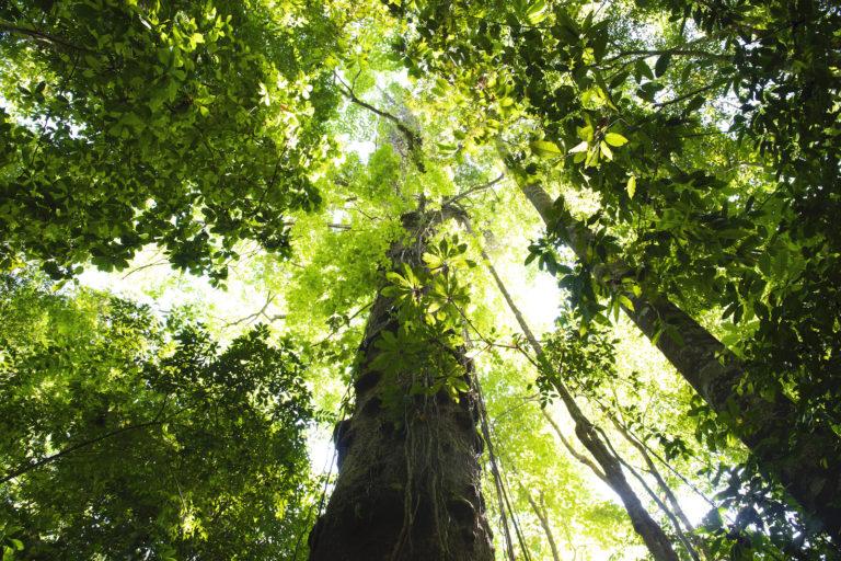 Península de Osa resguarda aproximadamente un tercio de las especies de árboles de Costa Rica, incluyendo la mitad de las especies amenazadas. Foto: Nina Cordero.