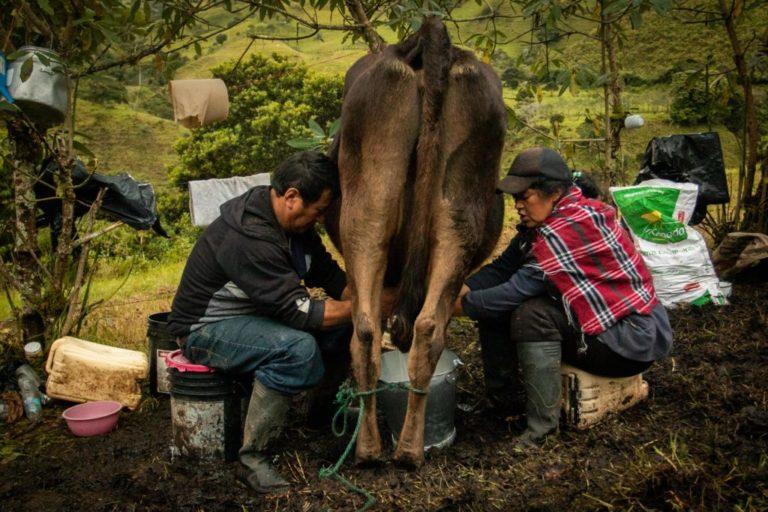os pobladores históricos de Buenos Aires se han dedicado a la ganadería y la agricultura. Foto: Iván Castaneira / Agencia Tegantai.