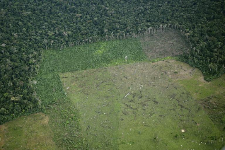 Sobrevuelo en zona deforestada en noroccidente del parque Chiribiquete. Foto: EIA.