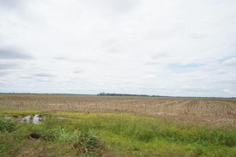 Los menonitas en Colombia tienen extensos cultivos de arroz, soya y maíz. Foto: Rutas del Conflicto.