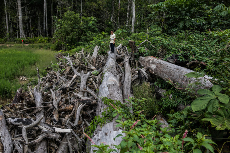 La comunidad nativa Caimito, en Perú, ha perdido por lo menos 200 hectáreas de bosques primarios, aseguran los líderes indígenas. Foto: Sebastián Castañeda.