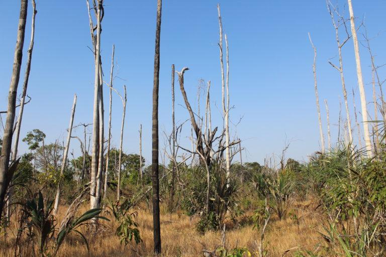 Bosque de los llanos colombianos después de ser afectado por un incendio. Foto: Tania González.