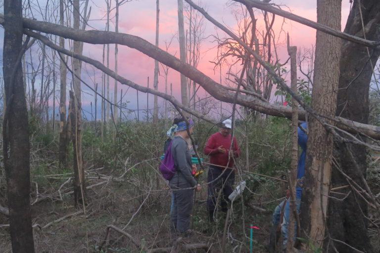 Bosque quemado en la Orinoquía colombiana. Foto: Eduardo Molina.
