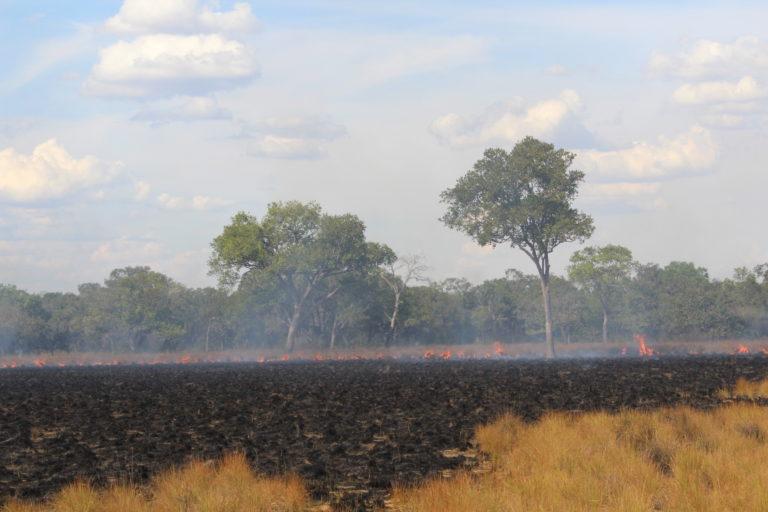 Sabana y bosque quemándose en los llanos orientales. Foto Tania González.