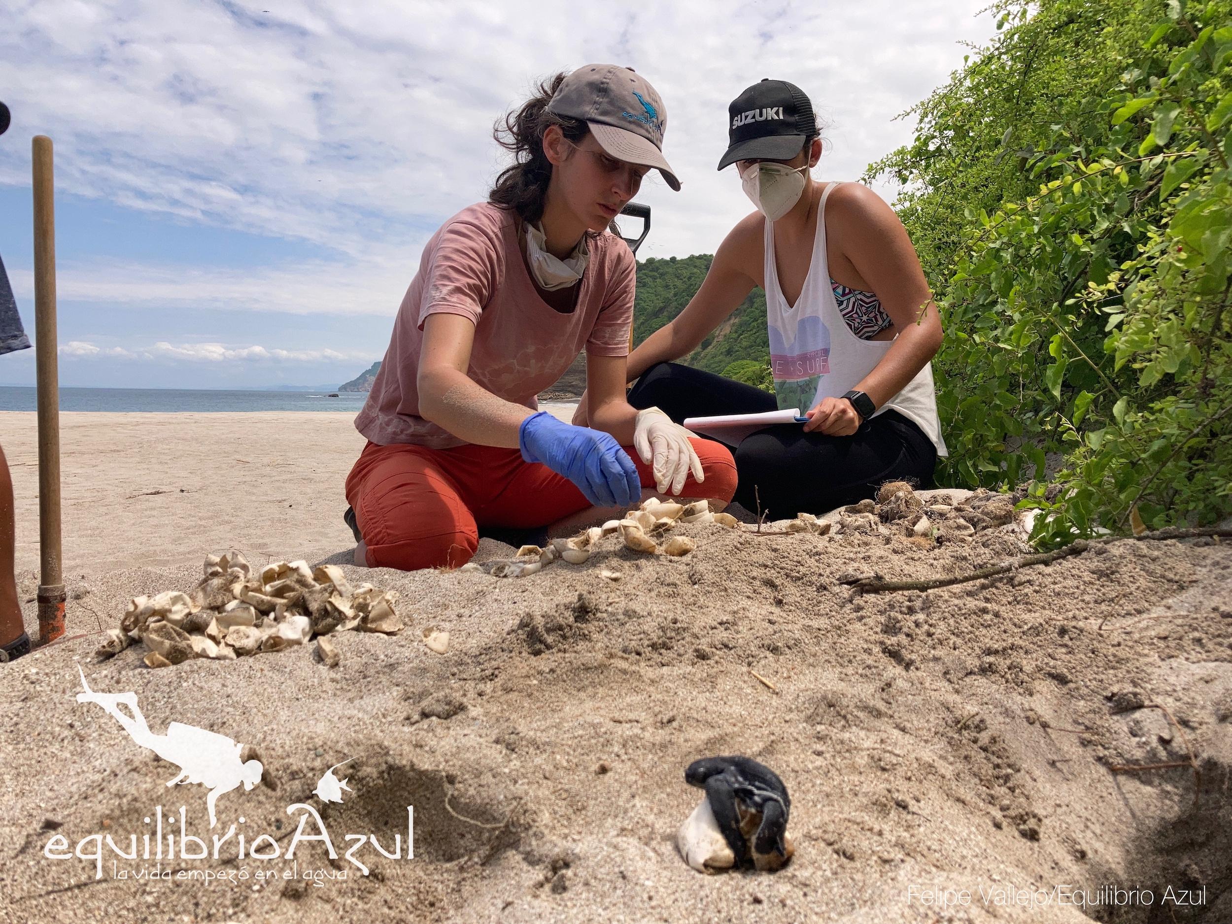 El equipo de Equilibrio Azul analizando algunos nidos de tortugas. Foto: Felipe Vallejo - Equilibrio Azul.