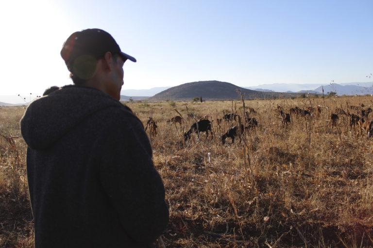 Las cabras de Ortigo presentan problemas en sus ojos, es probable que se por el polvo de la minera. Foto: Roxana Romero.