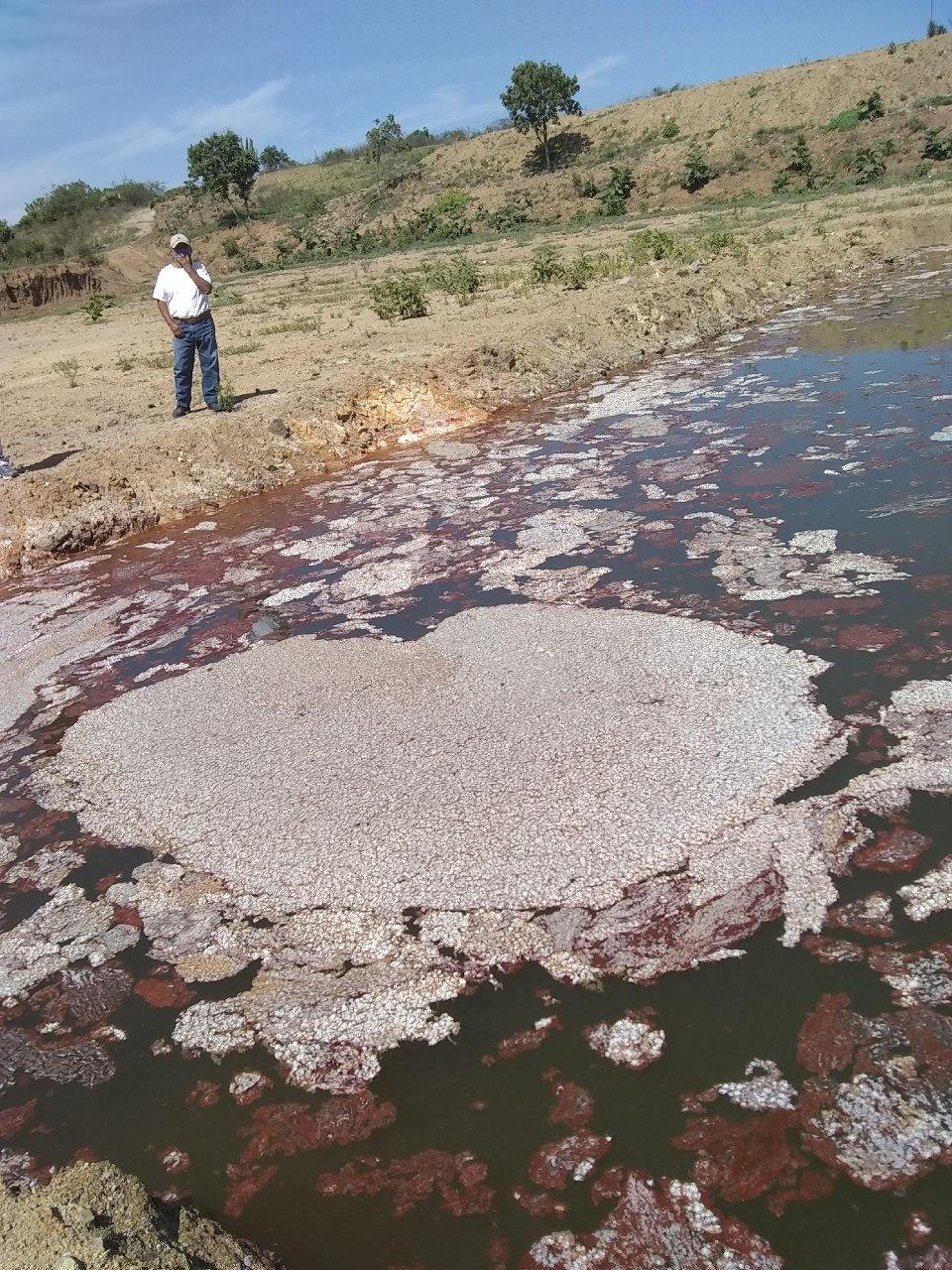 Algunos animales bebieron el agua roja de los retenes y luego murieron. Foto: Habitantes de comunidades de Valles Centrales de Oaxaca.