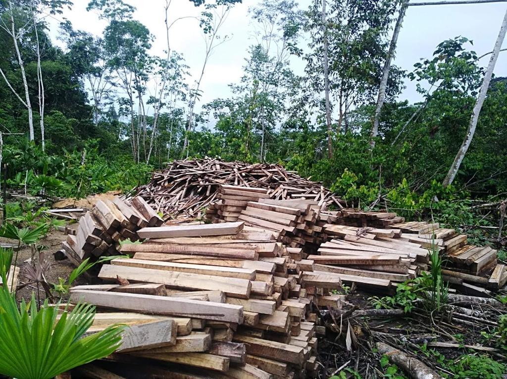 Sawn balsa abandoned along the Conambo River in the Sapara Indigenous Territory. Image courtesy of the Sapara Nation.