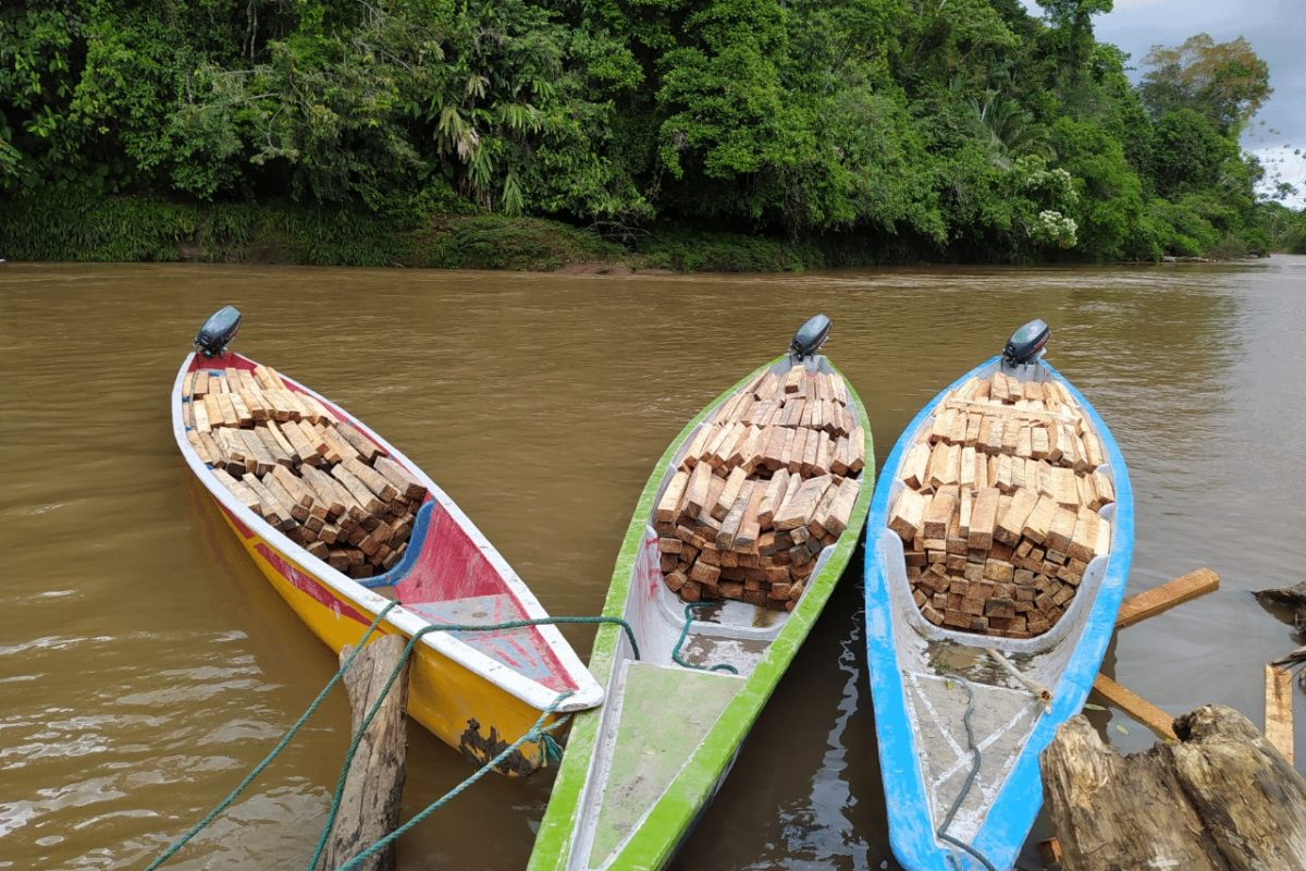 Boats used to transport balsa wood in the Achuar Indigenous Territory. Image courtesy of Fundación Pachamama.