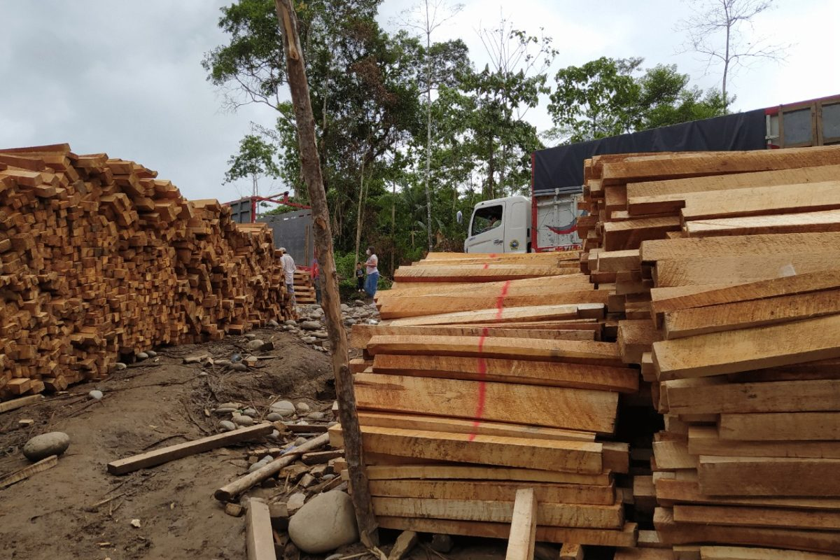 Sawn balsa lumber stockpiled for transportation in Copataza, one of the main balsa shipping hubs. Image courtesy of Fundación Pachamama.