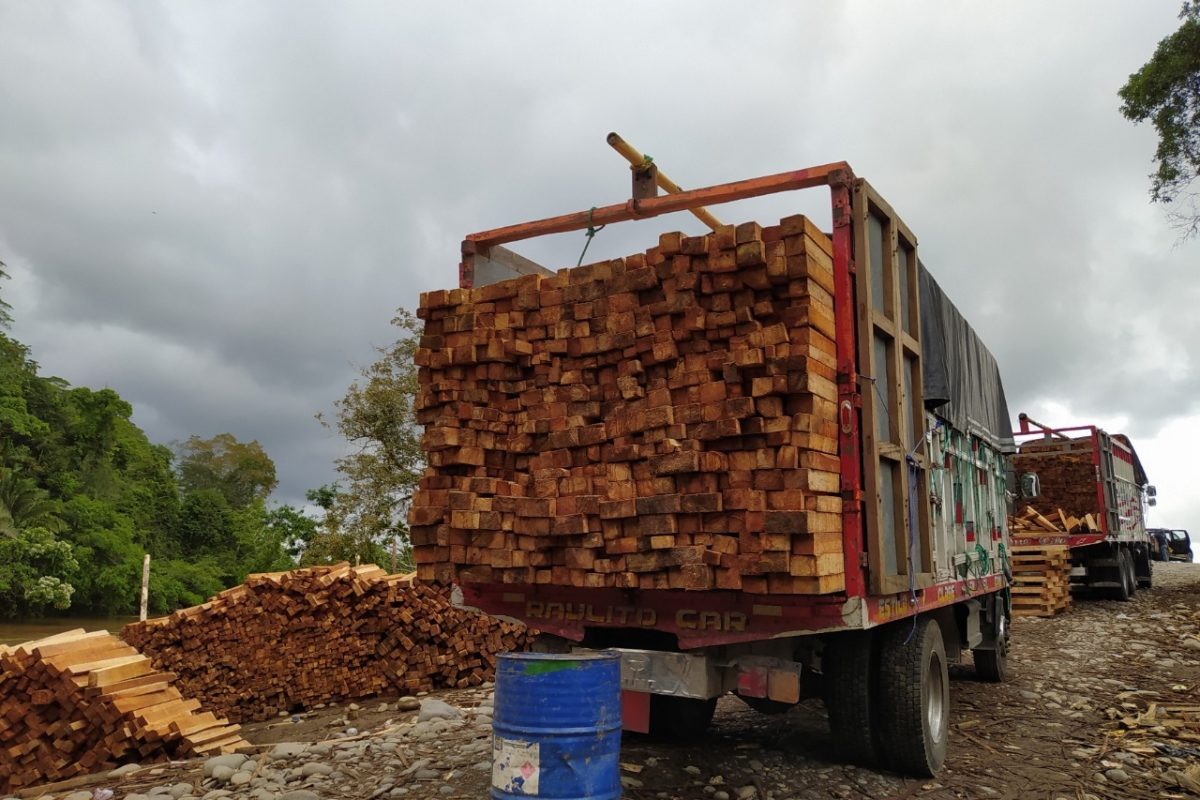 2020 saw a spike in balsa logging activity. Image courtesy of Fundación Pachamama.