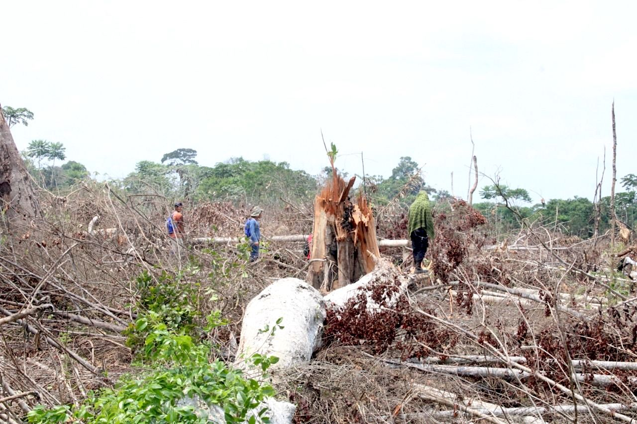 In 2020, Flor de Ucayali lost 213 hectares (about 526 acres) to deforestation. This is the highest amount of deforestation in the community during any year. Image courtesy of area community members.