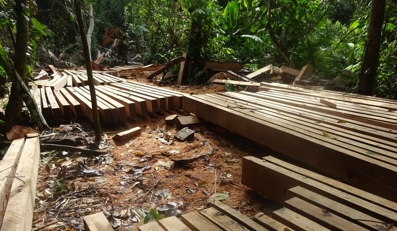 Trees are being logged and milled into lumber in the rainforest. Image courtesy of anonymous source.