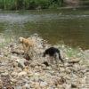 Perros que deambulan libres en ecosistemas de alta montaña de Ecuador. Foto: Galo Zapata-Ríos.