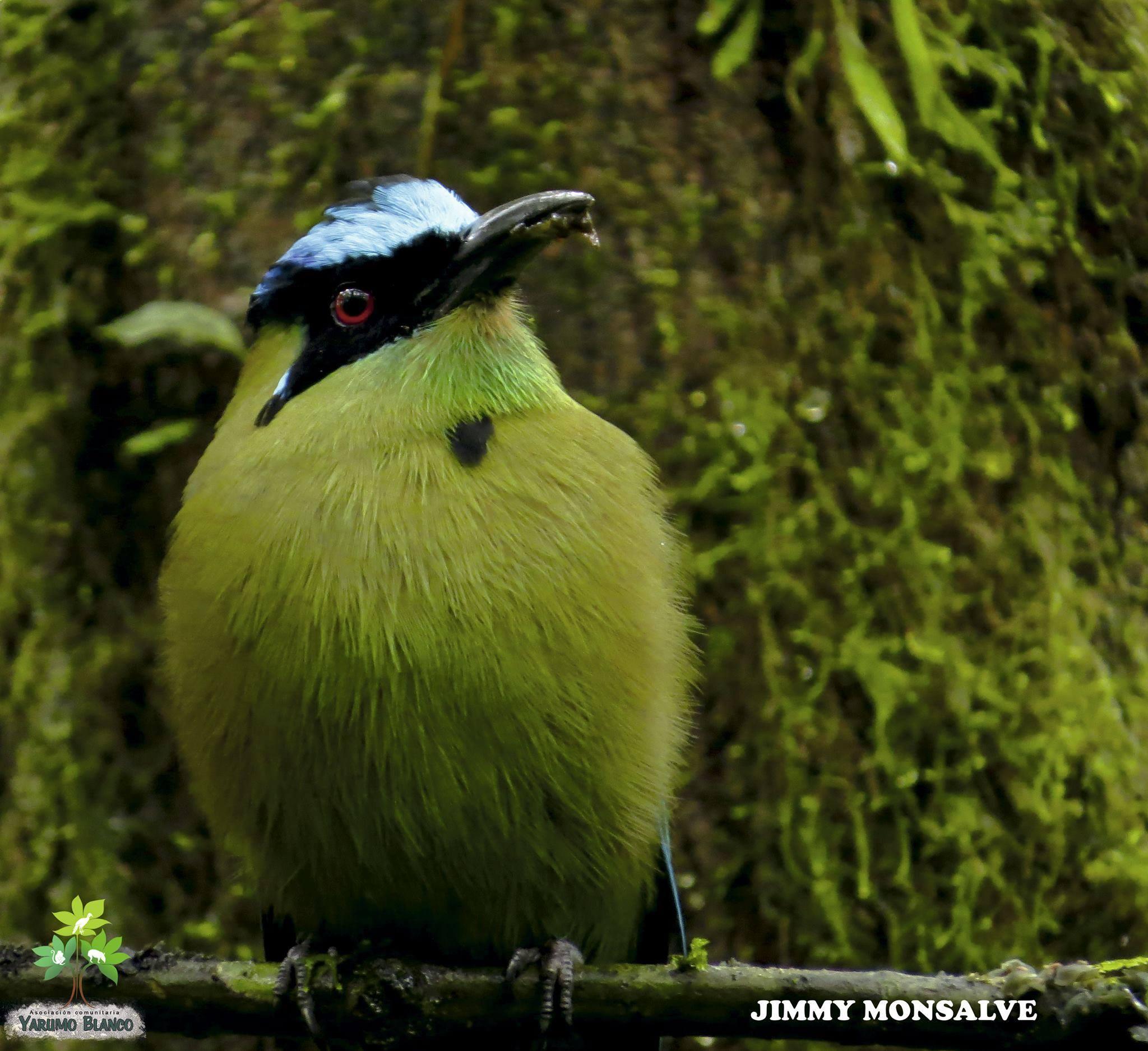 El Santuario de Fauna y Flora Otún Quimbaya es uno de los mejores sitios para observar Aves en Pereira. Foto: cortesía Yarumo Blanco.