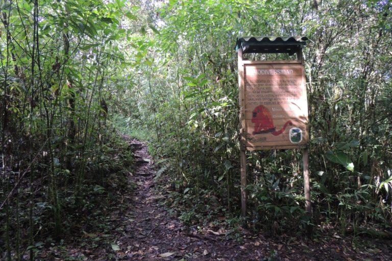 Santuario de Fauna y Flora Otún Quimbaya. Foto: cortesía Yarumo Blanco.