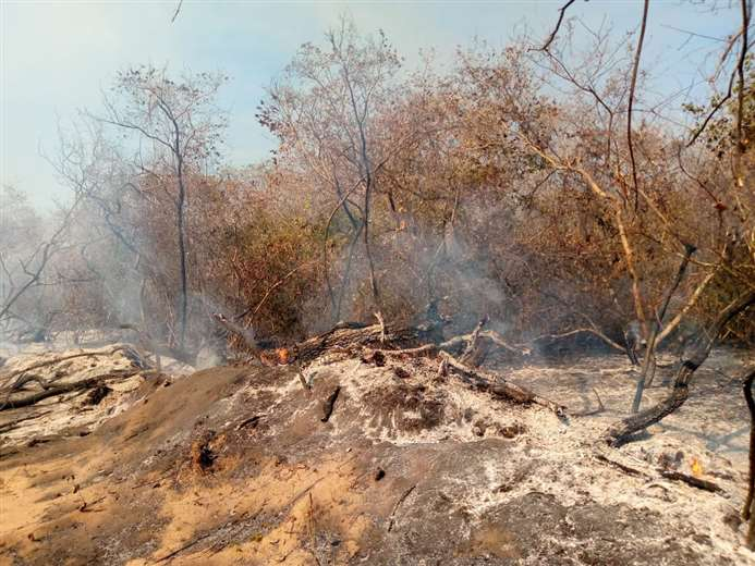 Scorched earth in the Tucavaca Valley municipal reserve.  Image courtesy of El Deber.