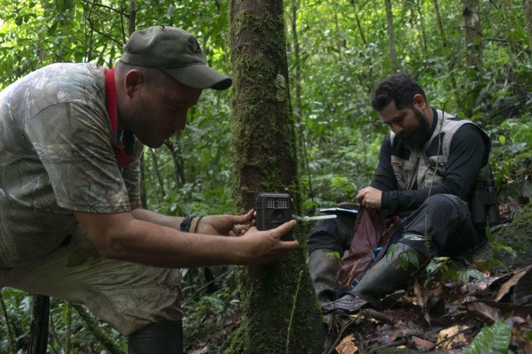 Instalación de cámaras trampa en el parque nacional Cordillera de los Picachos. Foto: ©Pablo Mejía - WWF Colombia.