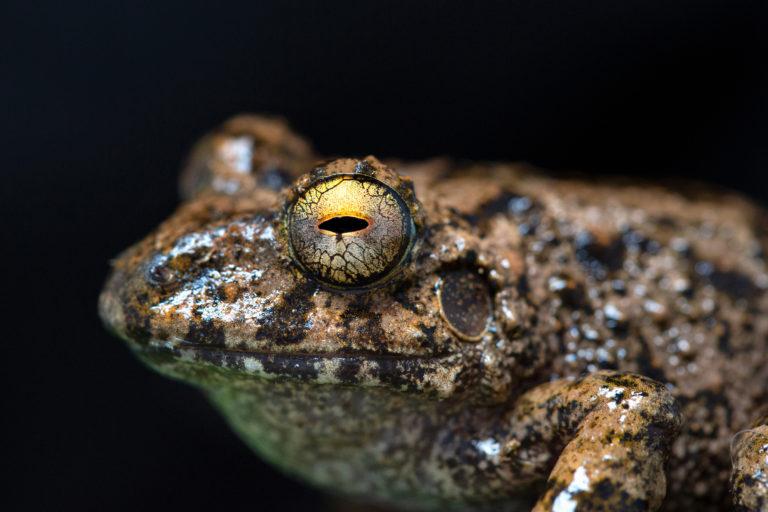 Las ranas más abundantes en la expedición fueron las del género Pristimantis. Foto: ©Pablo Mejía - WWF Colombia.