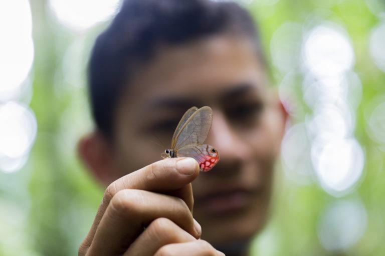 Las mariposas fue uno de los grupos más abundantes. Foto: ©Pablo Mejía - WWF Colombia.