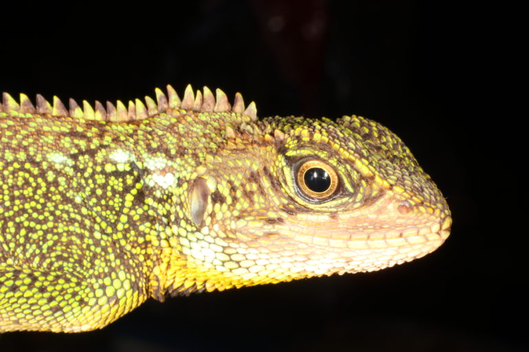 Mauricio Ortega lleva más de 15 años trabajando con anfibios y reptiles. Foto: cortesía Mauricio Ortega.