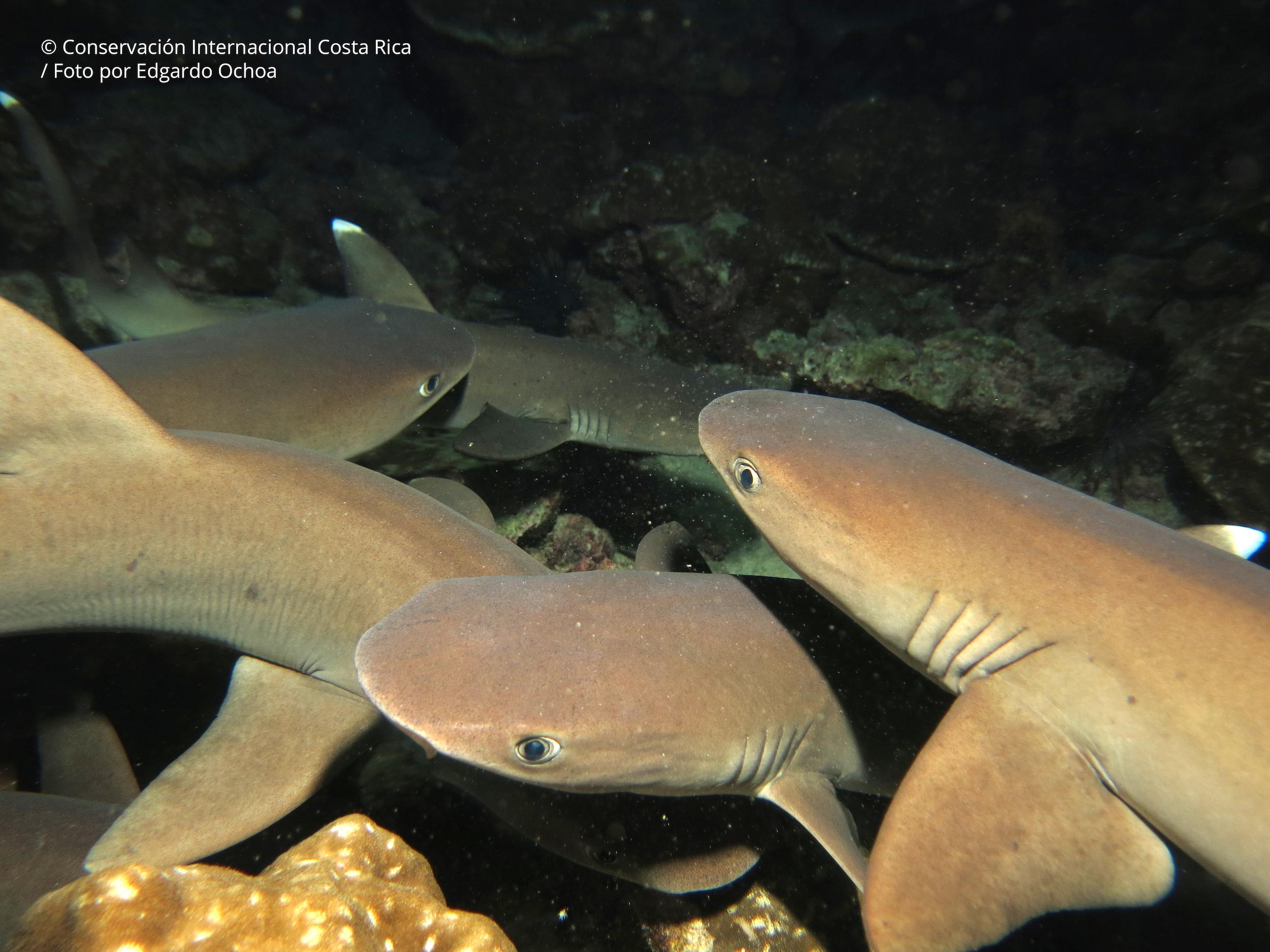 Costa Rica busca pasar del 2,7 % de zonas marinas protegidas a 30 %. Foto: ©Edgardo Ochoa - Conservación Internacional Costa Rica.