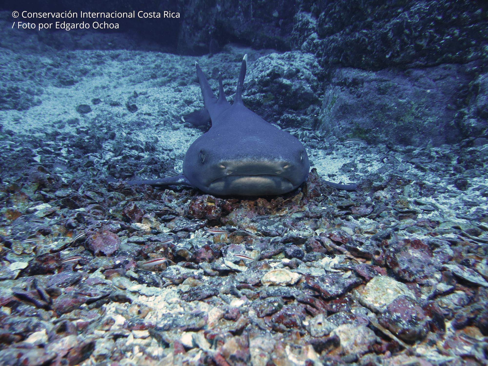 Isla del Coco es una zona vital para muchas especies de peces y forma un corredor especial con Malpelo en Colombia y Galápagos en Ecuador. Foto: ©Edgardo Ochoa - Conservación Internacional Costa Rica.