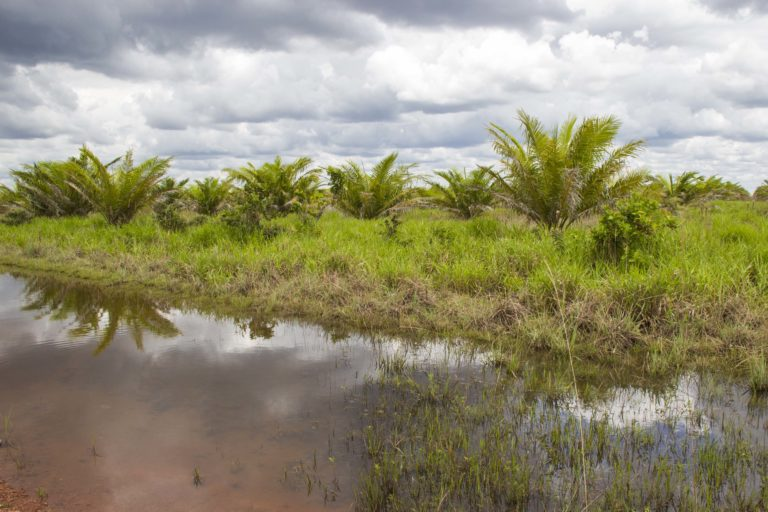 Cultivo de palma Agrícola El Encanto, costado oriental. Foto: Juan Carlos Contreras Medina.