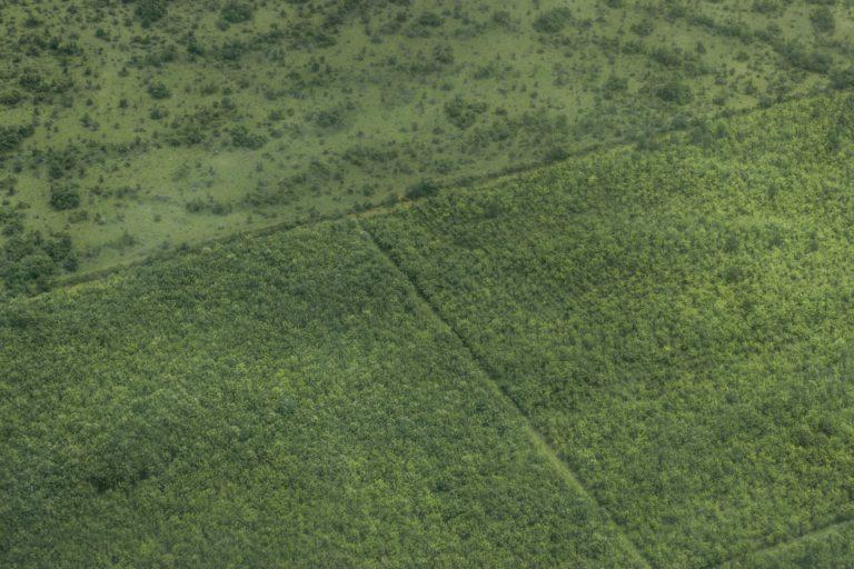 Toma aérea de cultivo de palma de la empresa Agrícola El Encanto. Foto: Juan Carlos Contreras Medina.