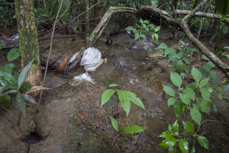El cultivo palmero tuvo sanciones por mala gestión de residuos sólidos. Foto: Juan Carlos Contreras Medina.