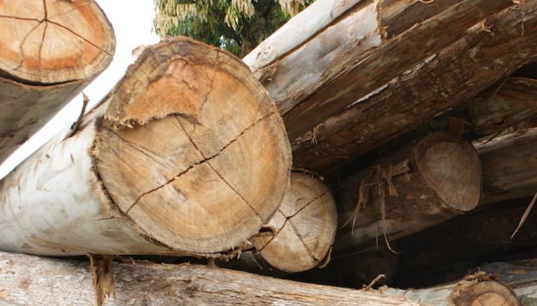 Des troncs d'arbres dans un camion au Kenya/Photo de Mongabay.com