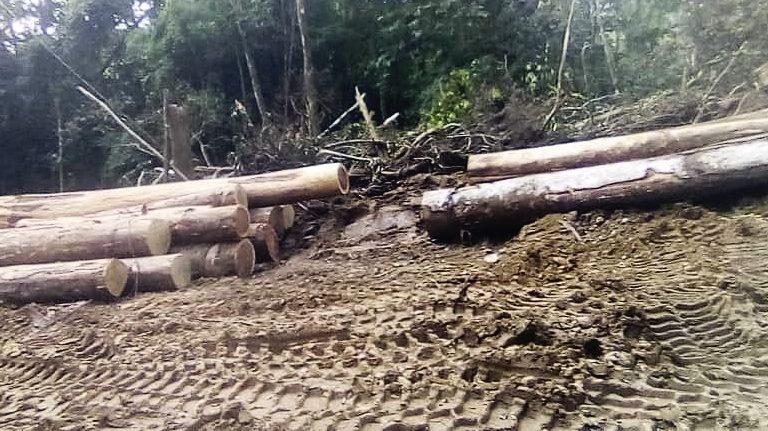 Vue de la forêt d'Ebo au Cameroun/ Crédit photo EBO FOREST PROJECT